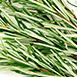 ingredient-rosemary